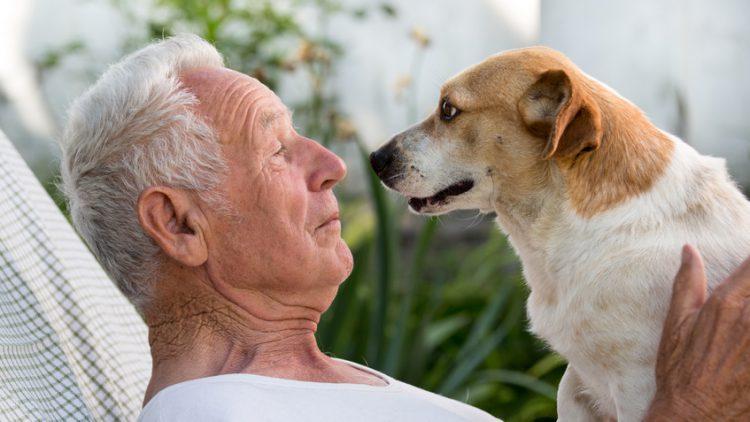 Ein Tier als Freund - Haustiere halten im Alter körperlich fit und geistig gesund