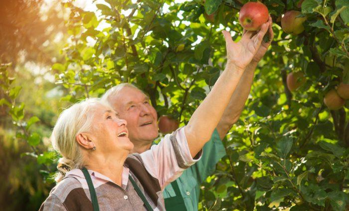 Älteres Ehepaar gemeinsam im Garten