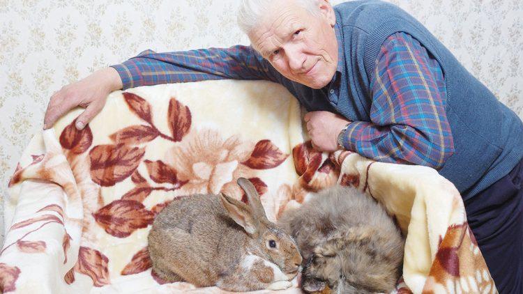 Haustiere für Rentner und Senioren - Mann mit Kaninchen auf dem Sofa