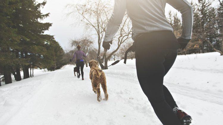 Bewegung senkt das Krebsrisiko - Zwei Frauen mit Hunden laufend im Schnee